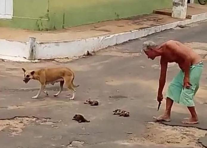 Photo of Idoso é flagrado matando filhotes de cães e gera revolta no Maranhão