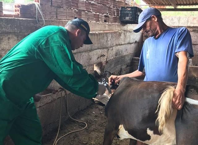 Photo of Campanha de vacinação contra a febre aftosa é prorrogada no Maranhão