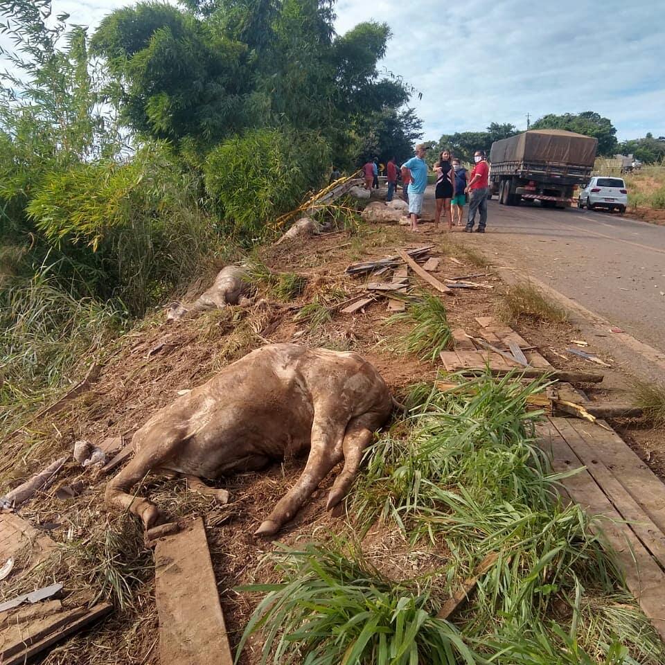 Caminhão carregado de gado tomba na BR-222 em Açailândia e animais ...