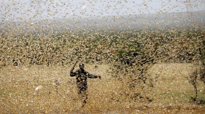 VÍDEO: Nuvem de gafanhotos chega à Argentina e se aproxima do ...